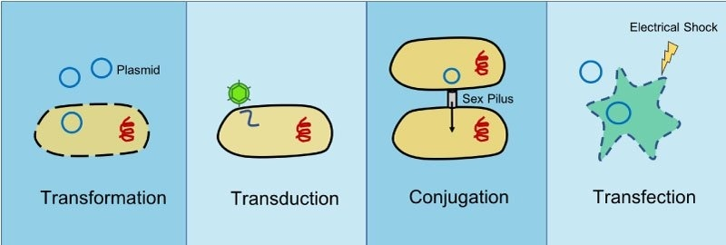 what is the advantage of genetic recombination as a mode of reproduction in bacteria?-4